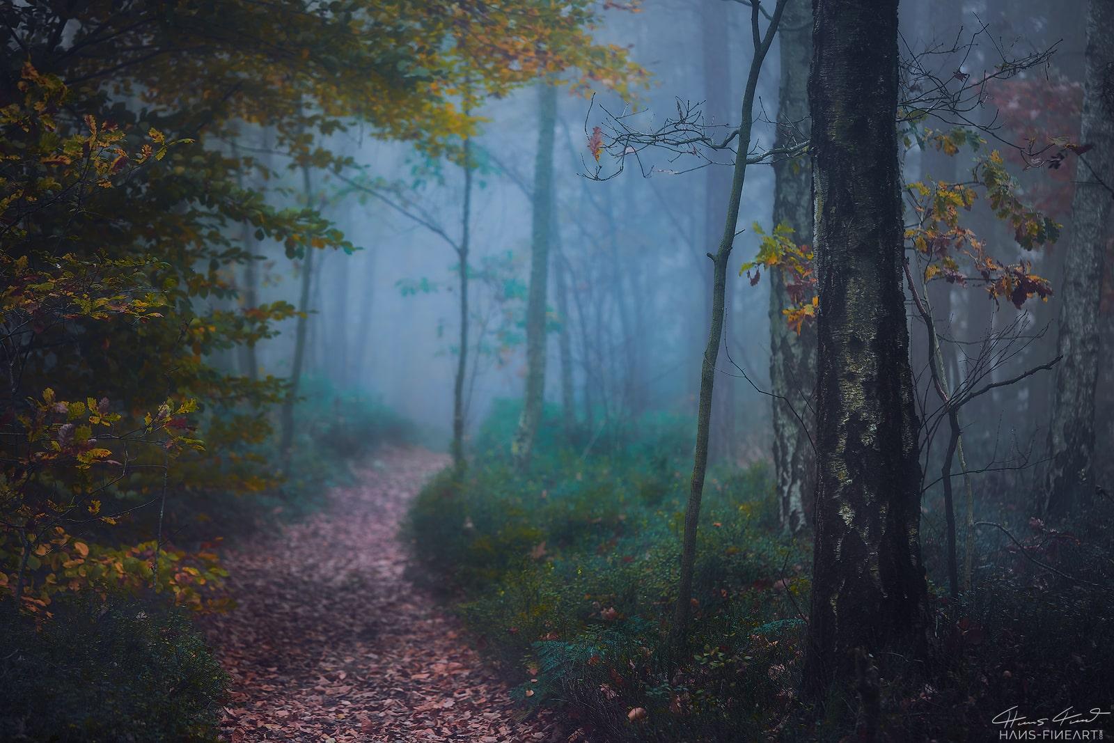 Sächsische Schweiz Elbsandsteingebirge Hans Fineart Wald Herbst