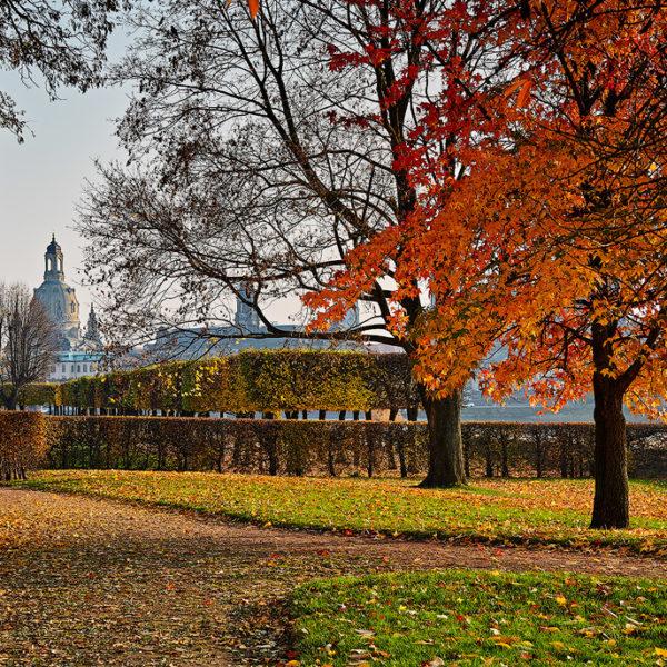 Herbst Elbwiesen Hans Fineart Sachsen Galeriebilder Dresden Japanischer Herbst