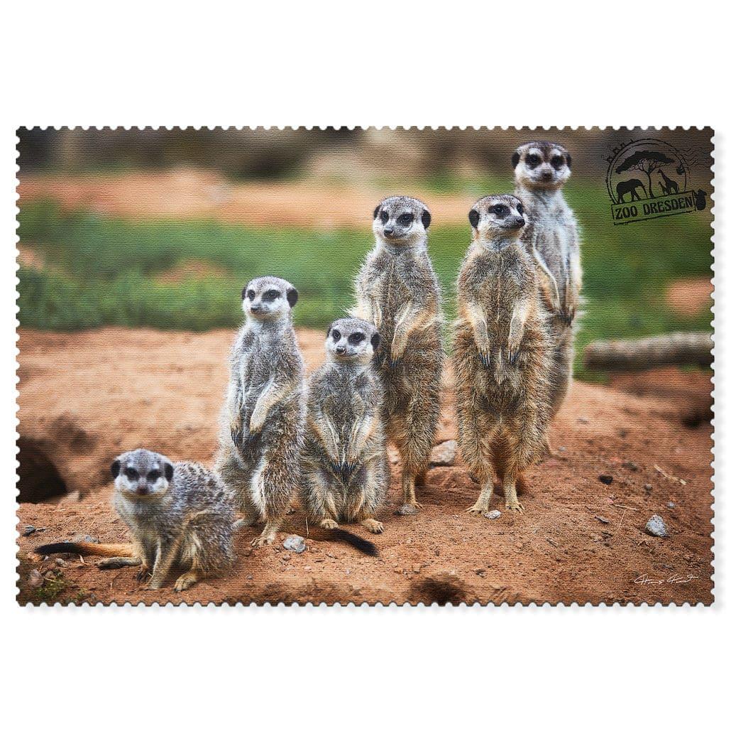 Zoo Dresden Postkarte cd005 Hans Fineart