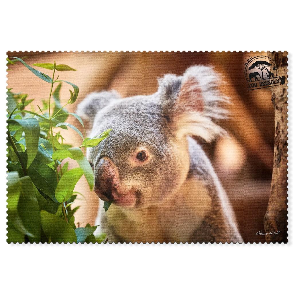 Zoo Dresden Postkarte cd004 Hans Fineart