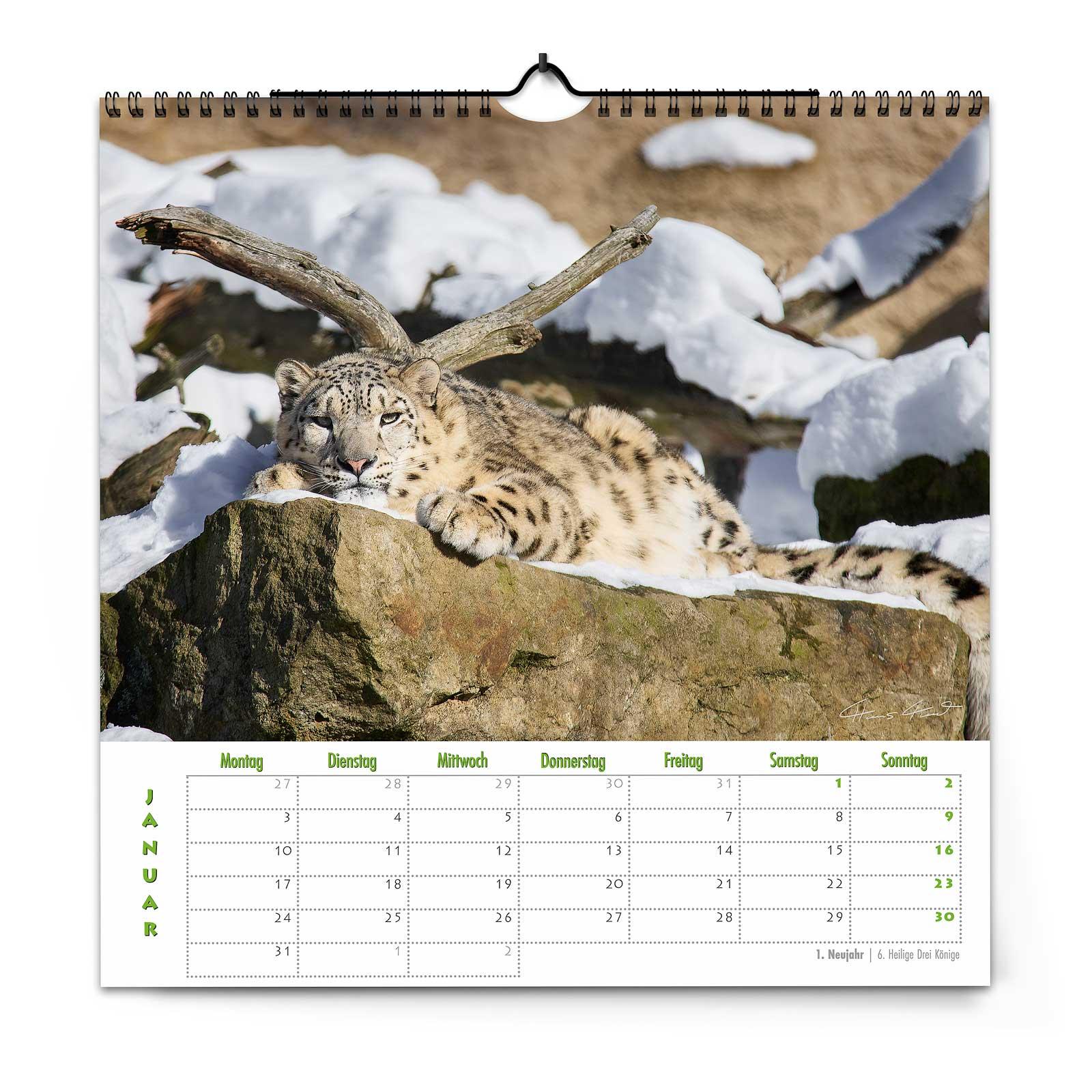Zoo Dresden Kalender 2022 von Hans Fineart